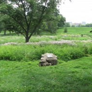 Hidden Creek Savanna in Forest Park
