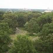 Kennedy Savanna in Forest Park