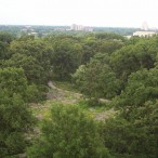 Kennedy Savanna in Forest Park